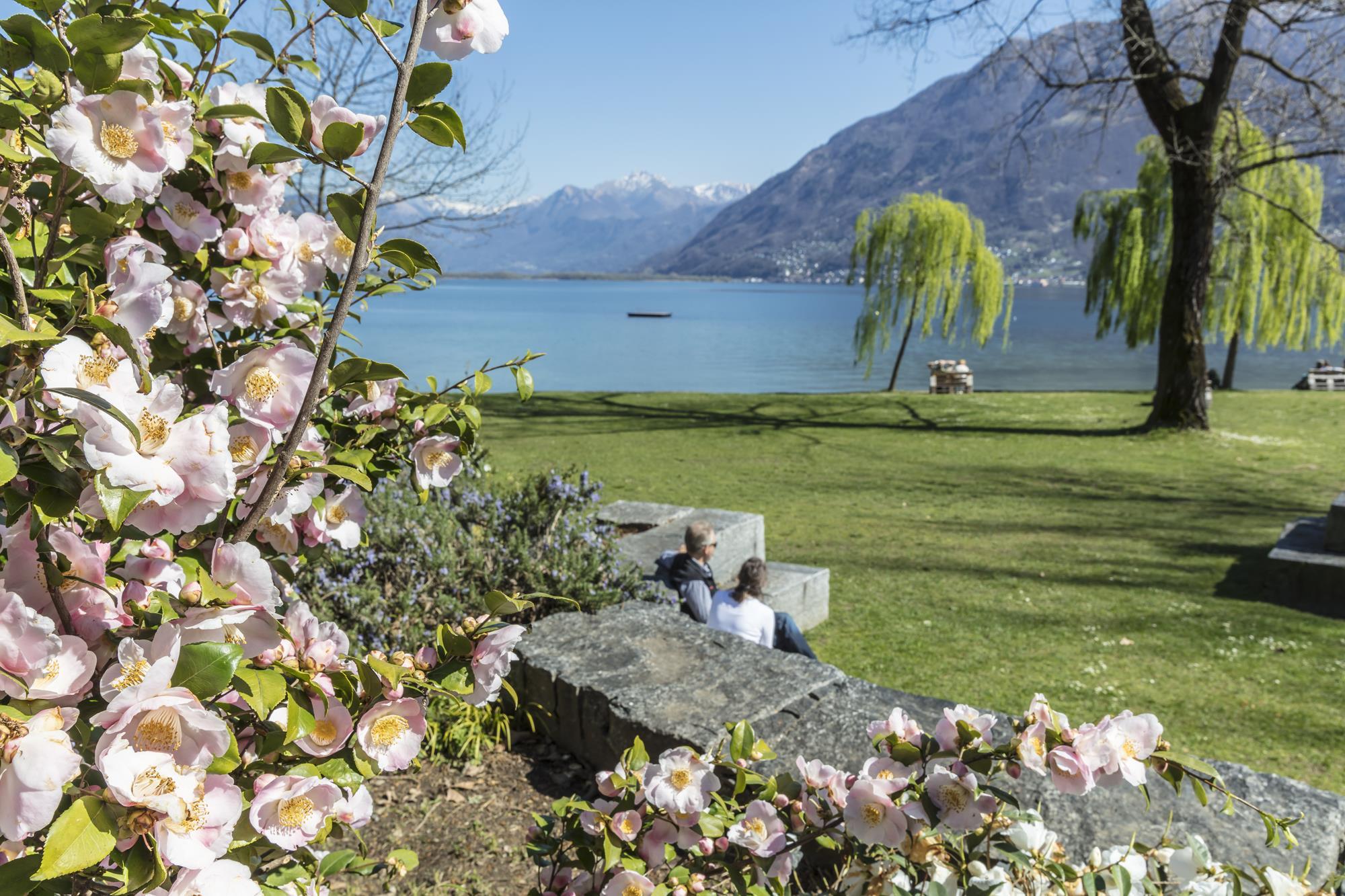 Camelie Locarno - ph. Ente Turistico Lago Maggiore (3)